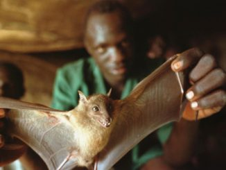 Ebola outbreak source maybe from a bat habitat in Guinea