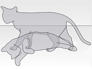 British physicist grasp the schrodinger cat