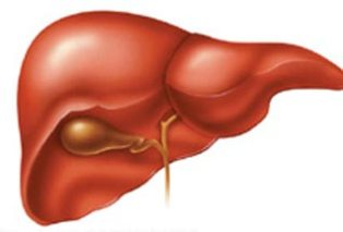 Nippon artificial liver function is equivalent to the human liver 1/10