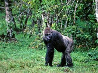 Wrong location designated protected areas, resulting in endangered animals