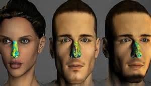 Human nasal olfactory mechanism 3D model